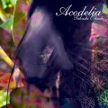 ACODELIA|TAKASHI O'HASHI
